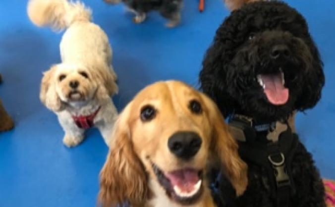 Get The Dogworks a fab new non-slip floor