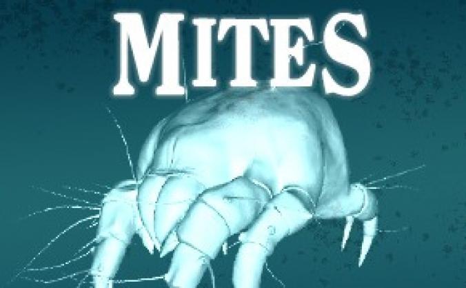 'Mites' at Tristan Bates Theatre