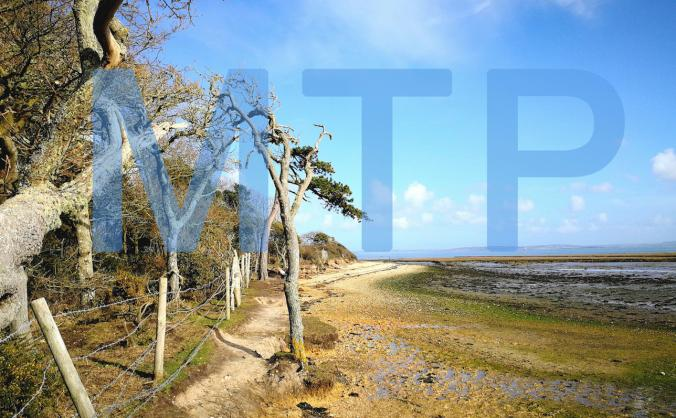 More Than Ponies - Contemporary Art and New Forest