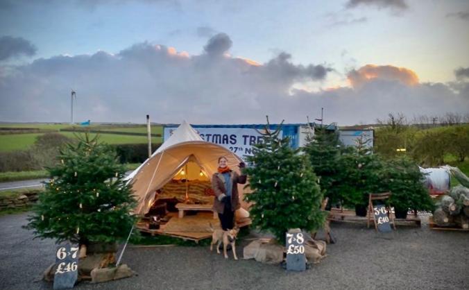 Hawksfield Christmas Trees