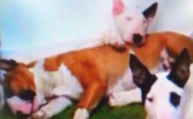 Appeal  destruction  order of 3 dogs