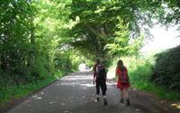 Ancestor's Trail