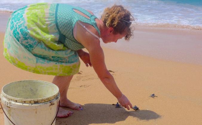 Build a Turtle Hatchery Pool in Sri-Lanka