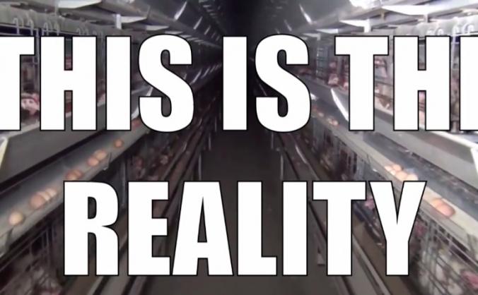 Write a new reality - Vegan Outreach
