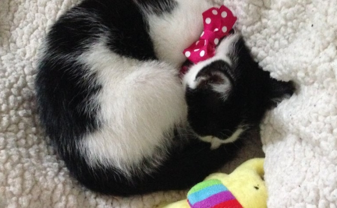 Help fund Norwich's first ever cat cafe!