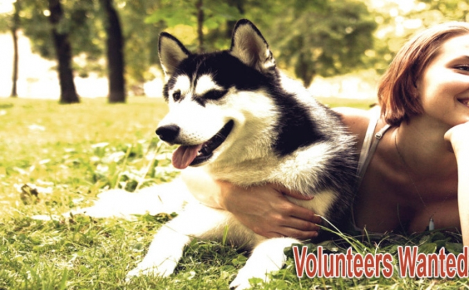 Wirral Husky & Malamute Rescue