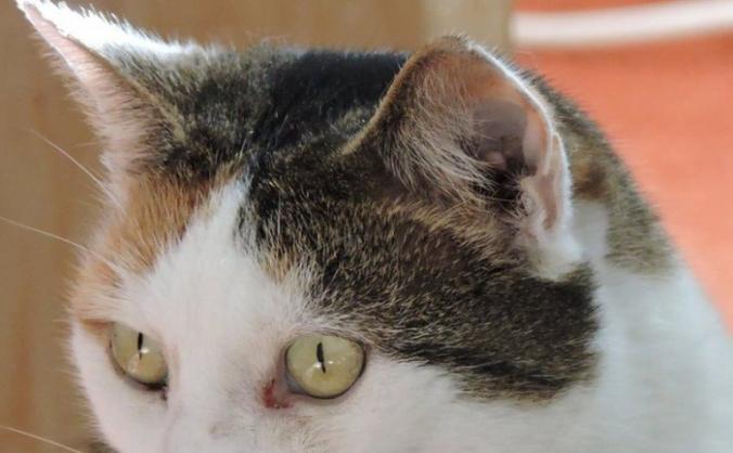 Help Catch the Croydon Cat Killer!