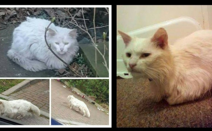 Page's petrescue Cat Fund