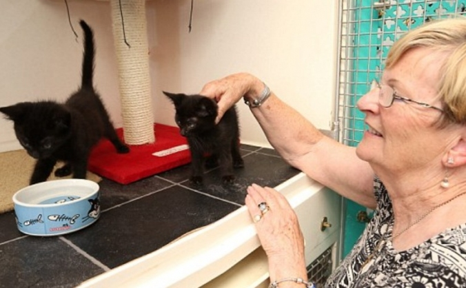 Millwood Cat Rescue Appeal