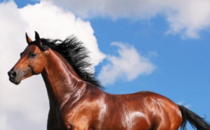 Equine paradise