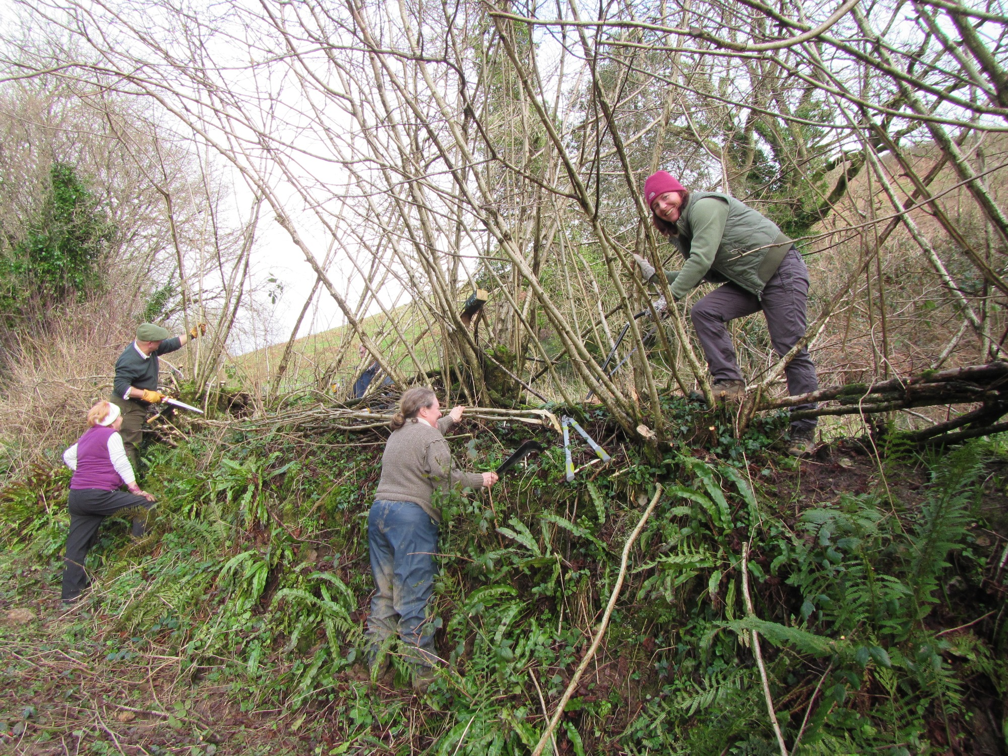 Laying a hedge in East Devon. Your donation will help us plant entirely new hedges