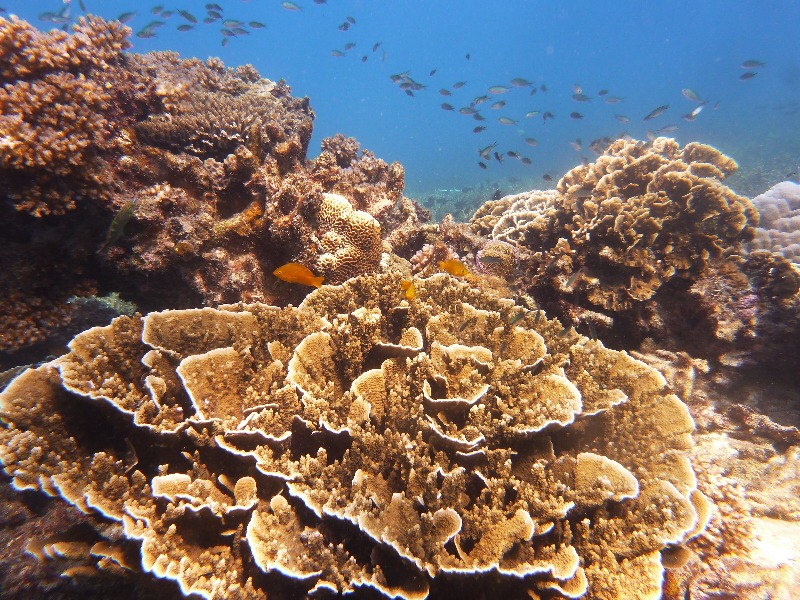 why coral reefs have been called the rainforests of the oceans The tragedy of the commons invading our environmental coral reefs have been called the rainforests more about the tragedy of the commons invading our.