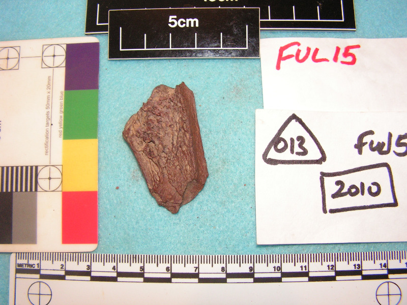 Sample of bone from 1066 layer at Fulford