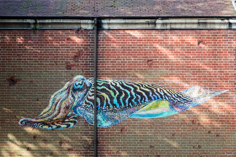 ATM cuttlefish mural by Strong Island