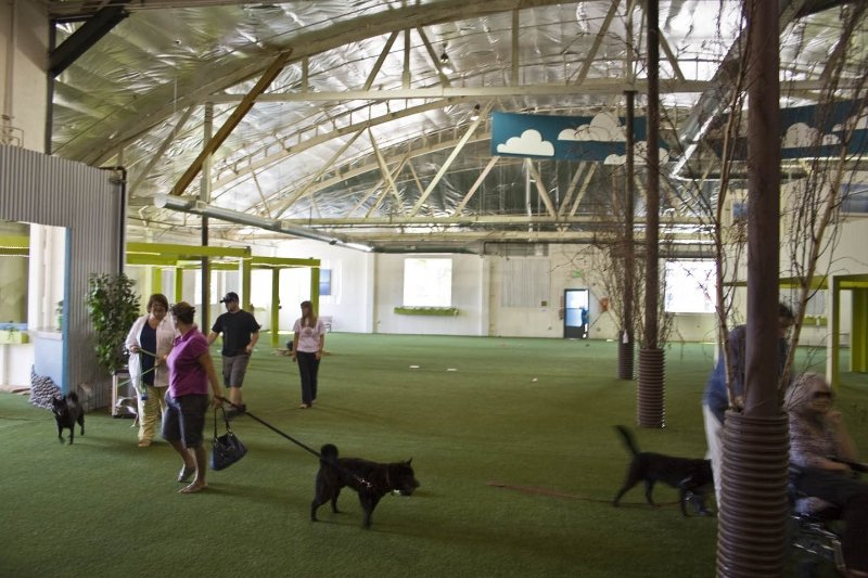 Benson Indoor Dog Park A Business Crowdfunding Project In