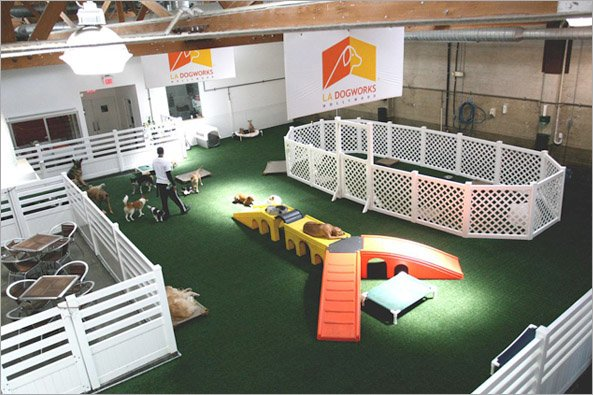Indoor Dog Park Sydney
