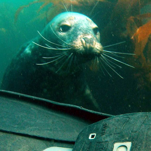 An inquisitive native in the UKs Farne Isles