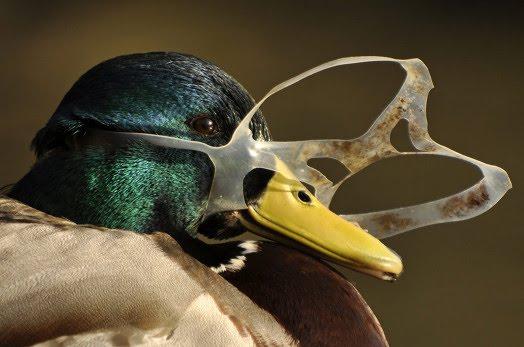 1605611880_duck_plastic.jpg