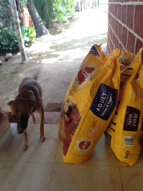 Dog food arrives