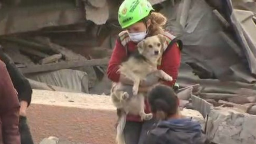 For The Displaced Pets of The Italian Earthquake