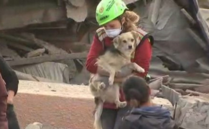 For the displaced pets of the italian earthquake image