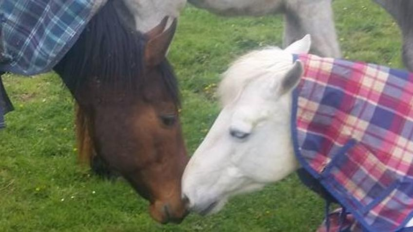 help with keeping our rescue horses.