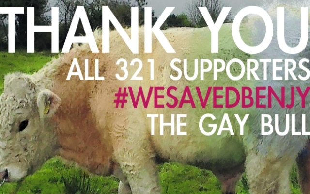Save Benjy The Gay Bull