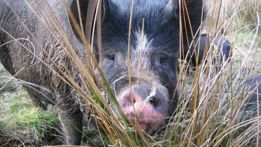 Our smallholding needs your help