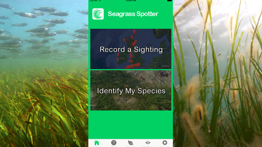 Taking Seagrass Spotter to the World
