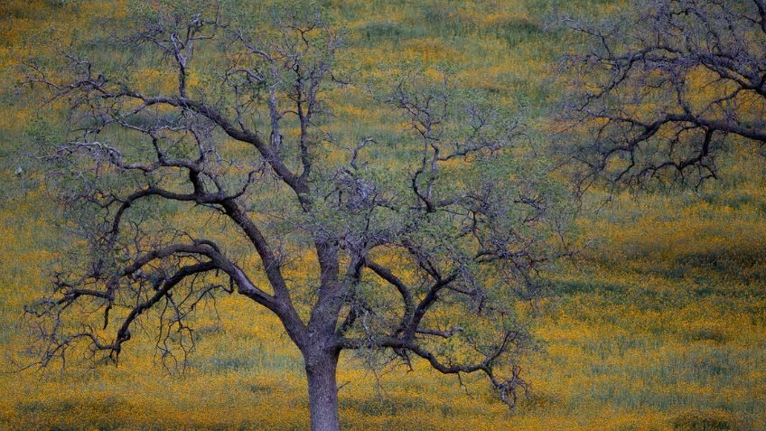 American Reforestation & Adaption fund