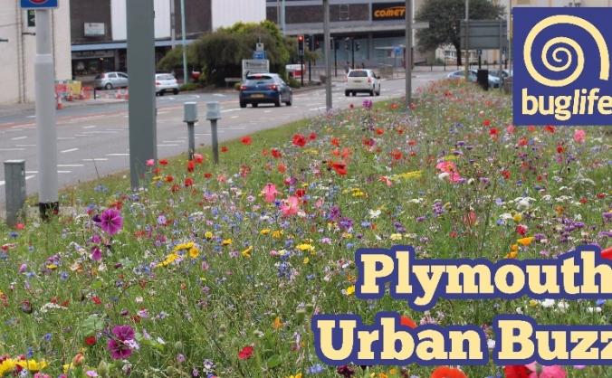Plymouth urban buzz image