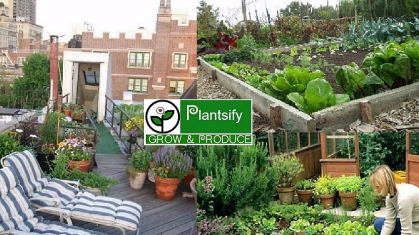 'Plantsify' app - planting to profit the public