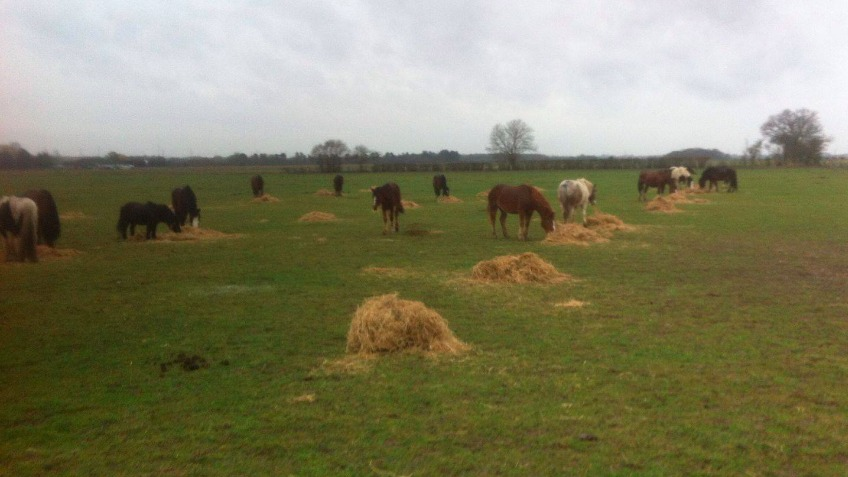 Essex Horse & Donkey Sanctuary