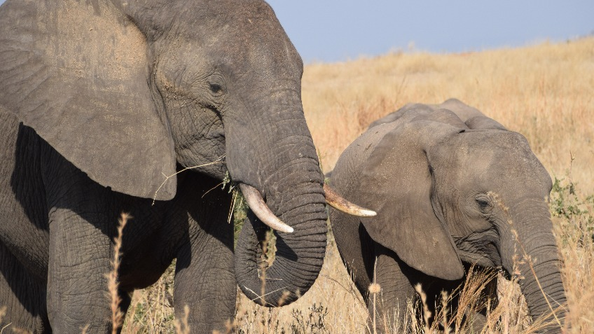 STOP ELEPHANT POACHING IN SOUTHERN TANZANIA
