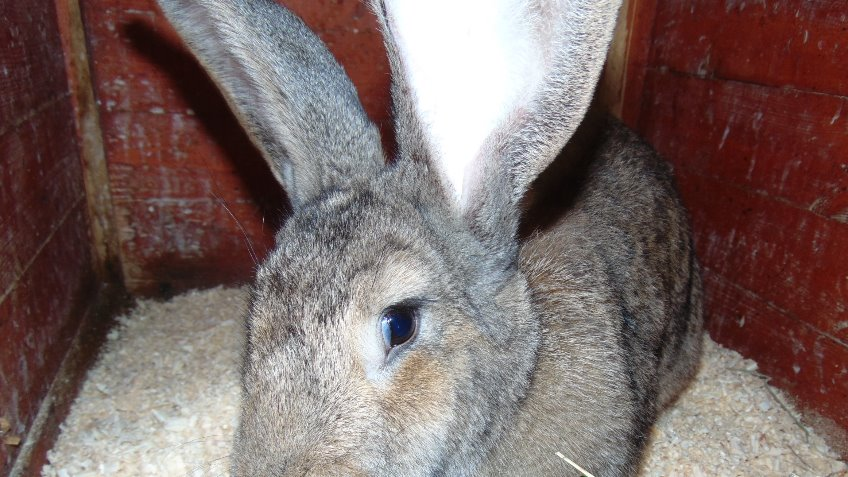 tameside rabbit and guinea pig rescue