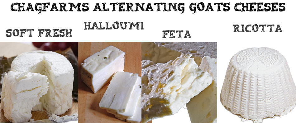 Chagfarms alternating cheeses