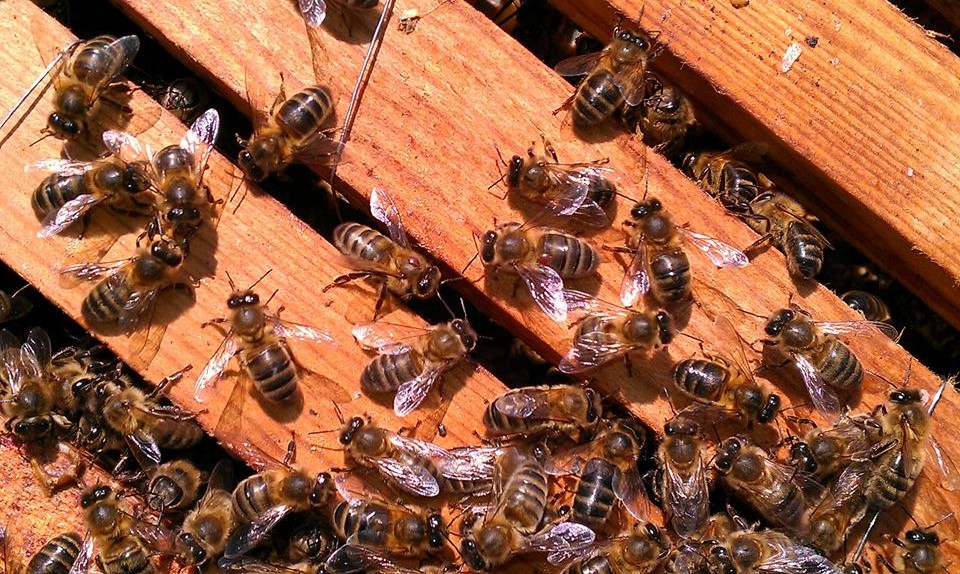 Bees need our help to revive in the UK