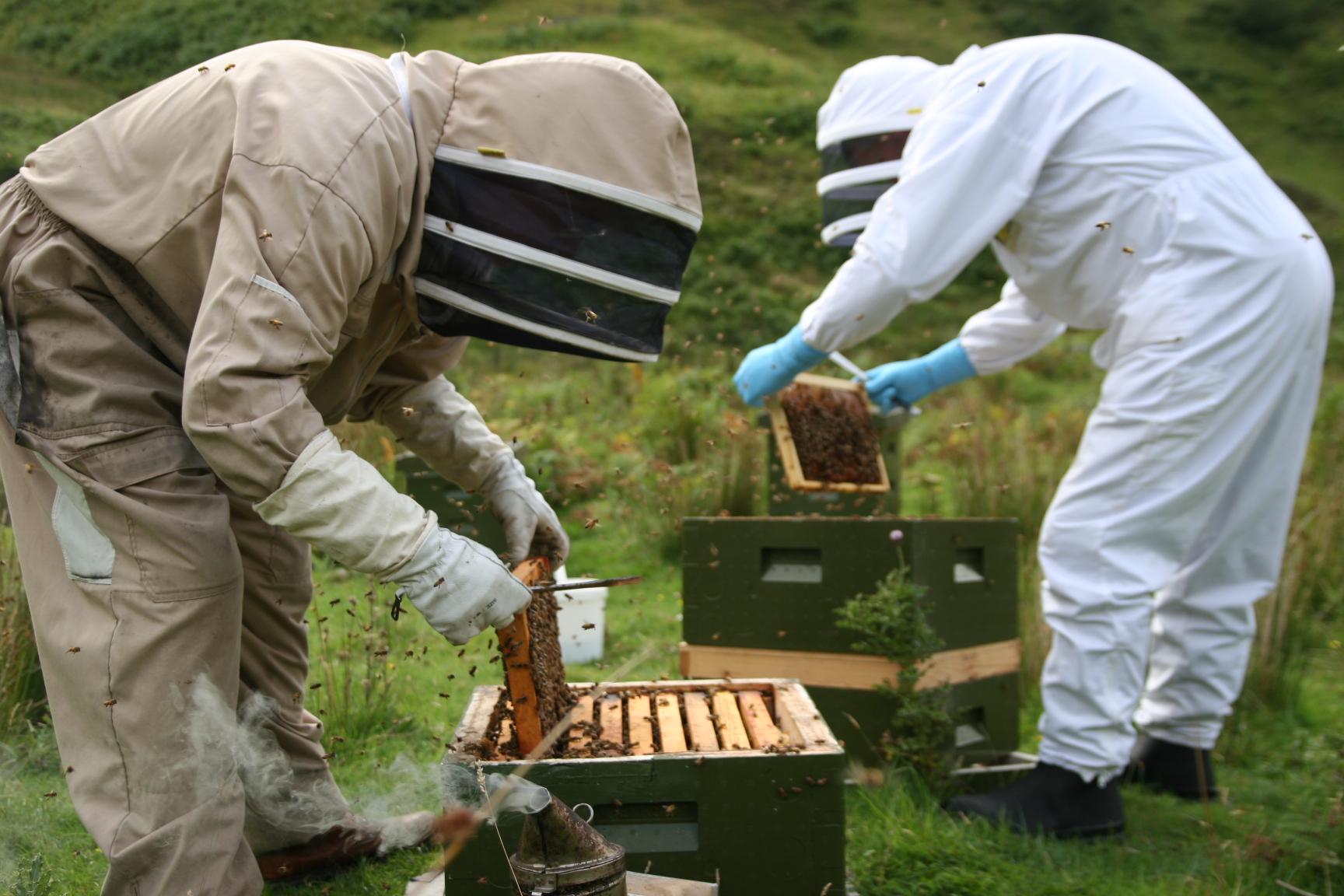 Beekeepers at work - You could try it out yourself