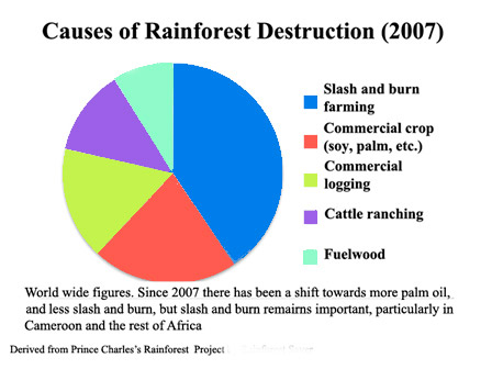 main causes of rainforest loss