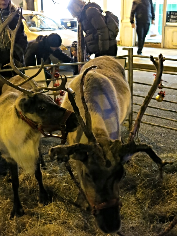 Reindeers at the Switch on