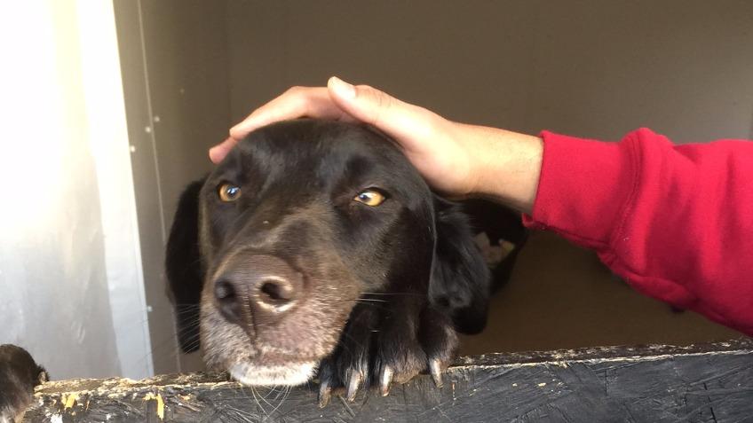 Romanian Dog Rescue In Uk