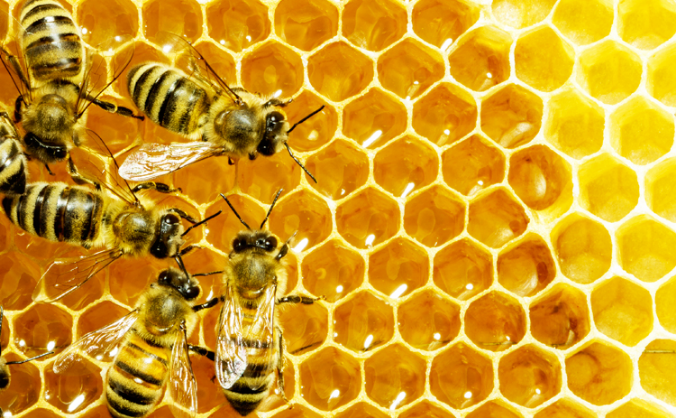 Bees Need you:  the Buzzing hive 2