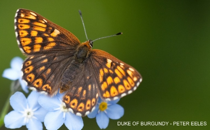 Save the dukes of the north york moors image