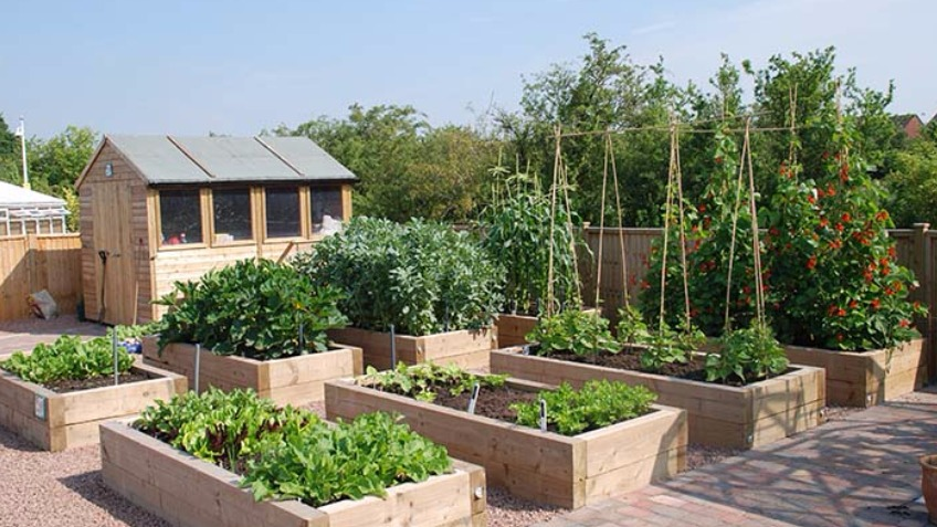 The Eating Place - Community Kitchen Garden