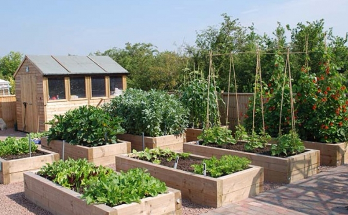 The eating place - community kitchen garden image