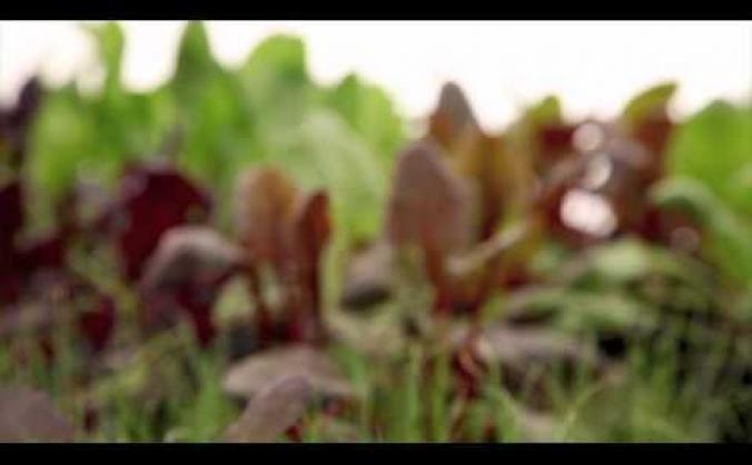Sutton Community Farm: VegBag Scheme