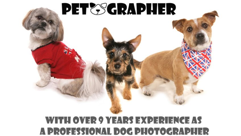 Mobile studio pet photography Petographer