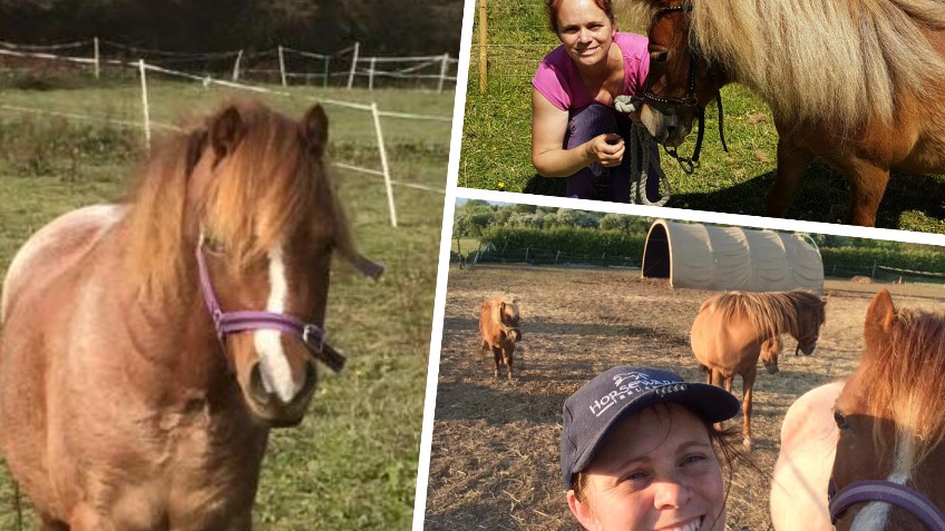 Save Pony Rescue - Animal Shelter