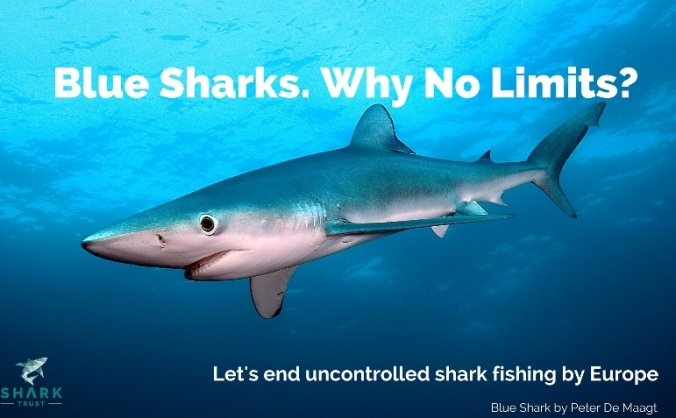 No limits? stop uncontrolled shark fishing image