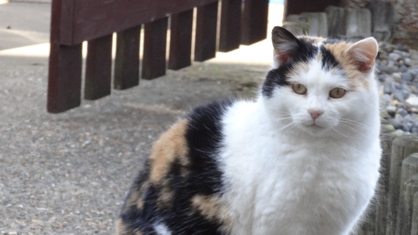 Help Street Cat Smudge get life-saving surgery